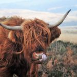 Bull by Horns 150x150 - Time to Take the 'Bull By The Horns' & Moo-ve To Magento 2?