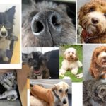 KFA Dogs 2019 150x150 - Every Day is 'Bring Your Dog to Work Day' at KFA!
