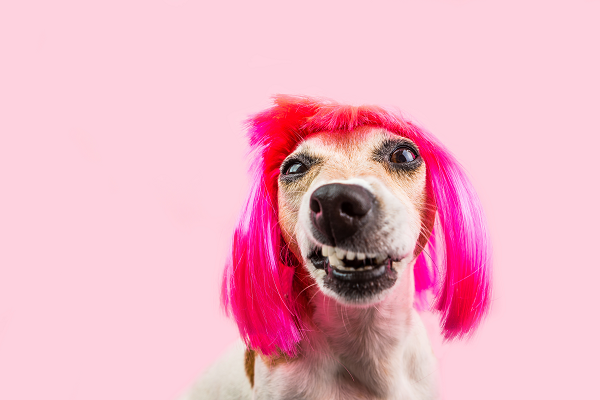Wear it Pink Dog - Wear it Pink 2018